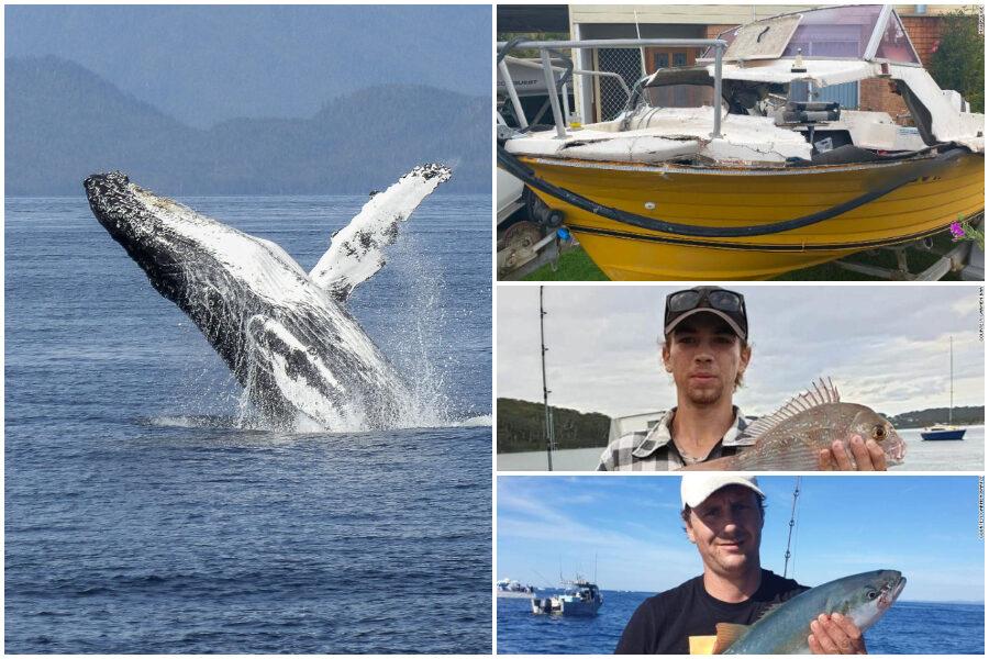 Balena salta sull'acqua e atterra su un peschereccio: è grave il giovane pescatore schiacciato dal cetaceo