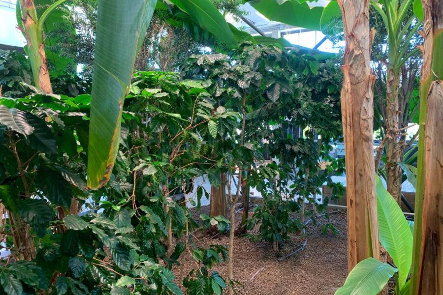 Dalla pianta alla tazzina, viaggio straordinario all'Accademia del Caffè Espresso