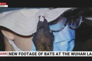 Pipistrelli vivi nel laboratorio di Wuhan, il video che imbarazza Cina e Oms sull'ipotesi del virus sfuggito dall'Istituto