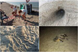 """Campania terra di tartarughe, trovati 40 nidi di Caretta Caretta: """"Bagnanti ora tocca a voi"""""""