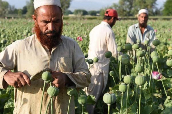 Afghanistan verso il crac: il Paese a un passo dal collasso rischia di tornare un narco-stato