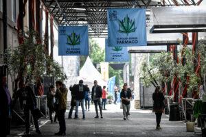 Cannabis in casa per uso personale, cosa prevede la legge che spacca la maggioranza