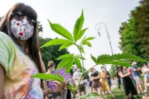 Referendum su depenalizzazione della cannabis, boom di firme: in 48 ore superate le 200 mila firme