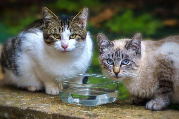 """Il mistero dei gatti di Lesignano, scomparsi nel nulla 50 felini: """"Segnalate i movimenti sospetti"""""""