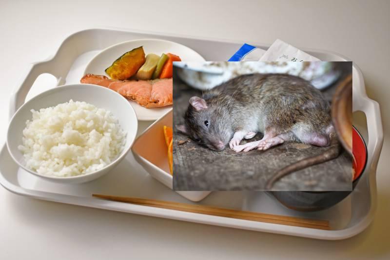Topo morto sul vassoio del paziente, pranzo con sorpresa in ospedale