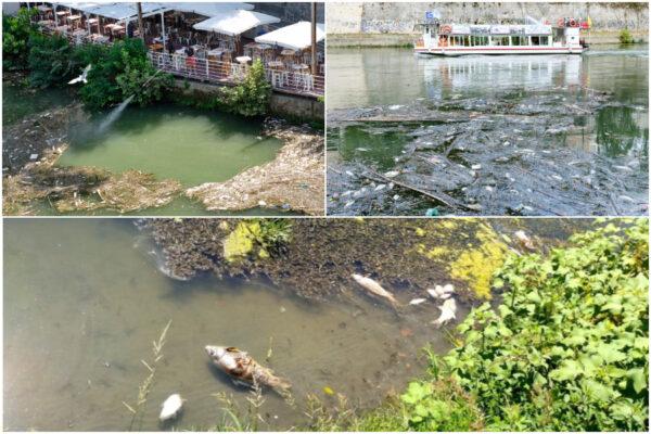 Moria di pesci nel Tevere, continua il giallo: Regione e Comune si rimbalzano responsabilità
